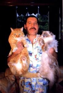 ATITUDINE. Freddie Mercury era fascinat de comportamentul felinelor