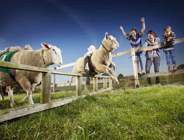 guinness_world_records_fastest_sheep_lambourghini