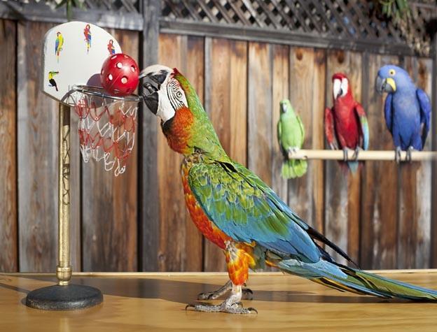guinness_world_records_slam_dunks_parrot_zac_0