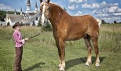 guinness_world_records_tallest_horse_big_jake