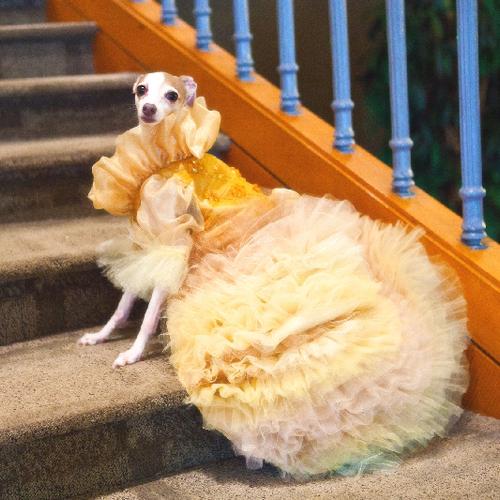 a_golden_dream_dress