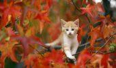 beautiful-cat