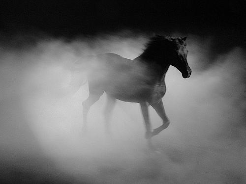 """Vezi cum arata calul """"pur sânge, cu adevărat pur""""!"""