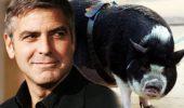 Stiati ca George Clooney a apelat la spiritism …. pentru a-si alina dorul de companionul sau?