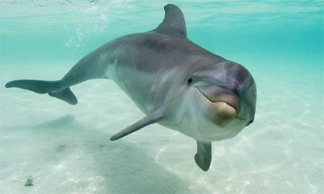 Delfinii aud cu tot corpul
