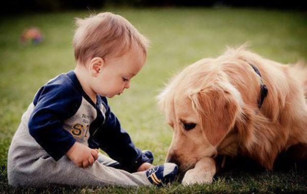 copiii si animalele