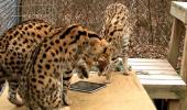 Ce vrea pisica ta de Crăciun? O tableta, normal! VIDEO