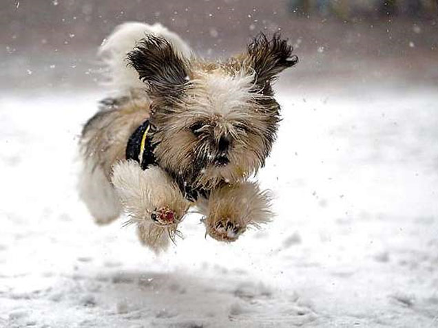 little-dog-snow-thumb-autox477-9394