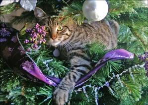 News Alert – Am pierdut pisica..