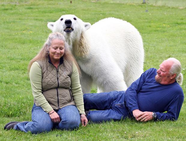 polar-bear-wife_1935310i