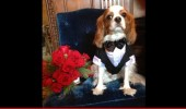 0101-subasset-hugh-crystal-dog-3