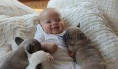 Patru bebeluși la ora de somn! Trei dintre ei sforăie îngrozitor și au urechi ciudate!
