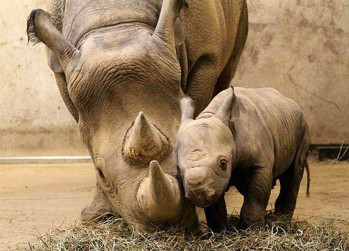 Este inexplicabil gestul lor. Uite ce i-au făcut vizitatorii unui rinocer de la o grădină zoo