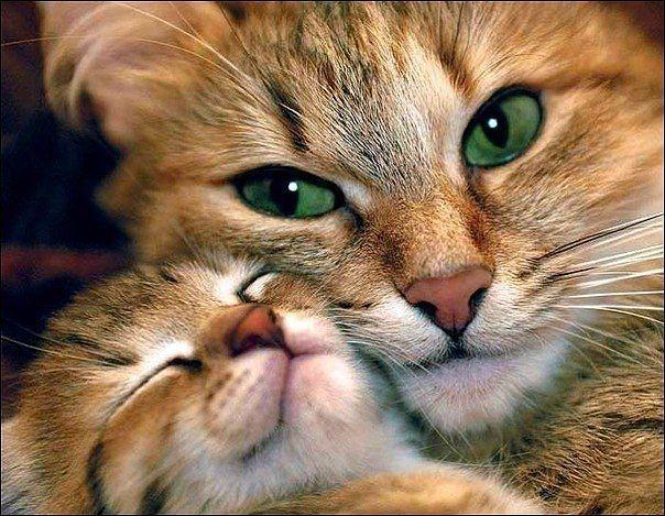 22 pisic
