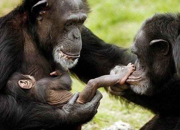 25 maimuta