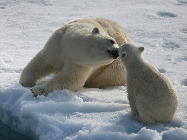 32 polar
