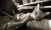 Terapia torsului pisicii, folosită împotriva stresului, insomniei şi anxietăţii