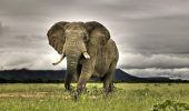 Tragic! În Kenya, 70 de elefanti sunt omorati zilnic
