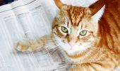 O pisică din Marea Britanie a depăşit exactitatea autorilor de prognoze financiare
