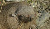 100 de specii dispar zilnic de pe fata pamantului