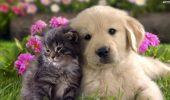 Animale bune pentru sănătate!