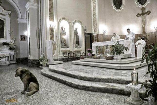 De când i-a murit stăpâna, un câine participă la toate slujbele din biserica unde mergea femeia