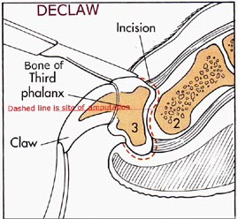 declaw-procedure-for-cats