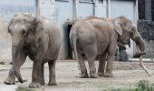 Preşedintele Franţei refuză să graţieze doi elefanţi, Baby şi Nepal, suspecţi de tuberculoză