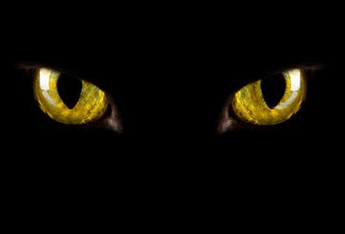 Rage ca un leu, e unul dintre cele mai fioroase animale din lume si cantareste aproape 2 tone!