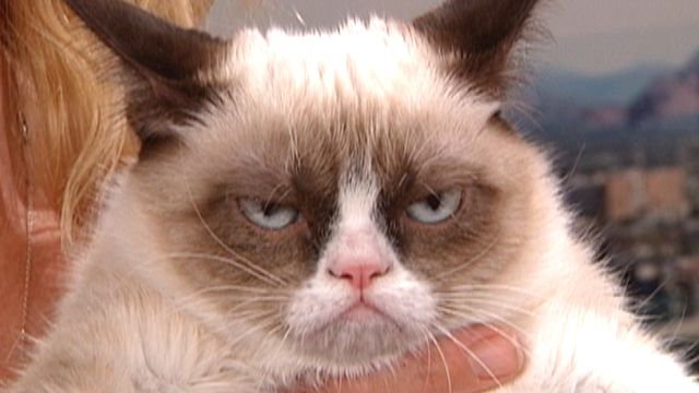 grumpy_cat_640