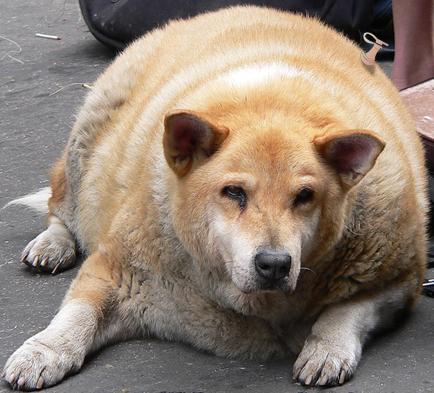 huge-dog