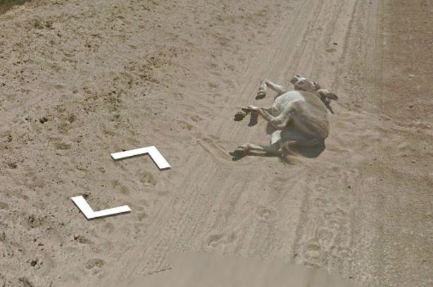 Angajat GOOGLE acuzat că a ucis un măgar după ce imaginea animalului mort a apărut pe Google Street View