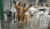 10.000 de animale fara stapan au fost sterilizate anul trecut