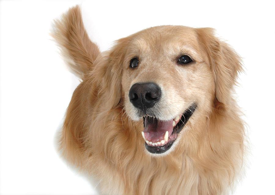 Super ALIMENTE pentru câini! Sigur NU ȘTIAI ASTA