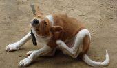 Problemele de piele ale cainilor | Cum le identifici?