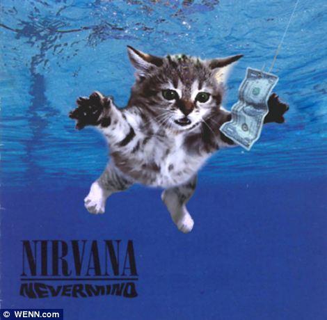 Daca pisicile ar fi cantat… | Superhaios!