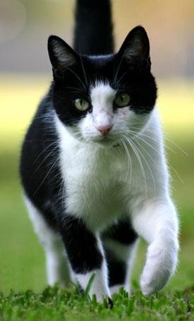 Știi câte pisici poți să deții în Zurich?