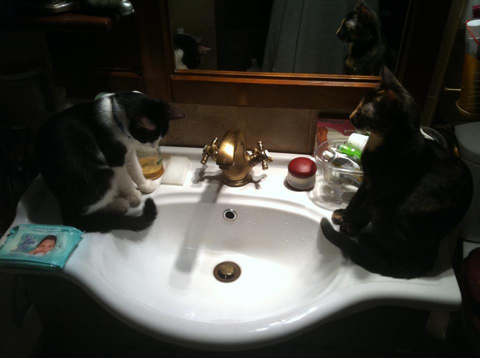 pisici carmen tanase 8 in total