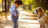 ANIMAL ZOO, ghid obligatoriu pentru fiecare iubitor de animale!