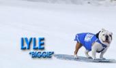 Pârtieee! Dați-vă că vin câinii pe snowboard!