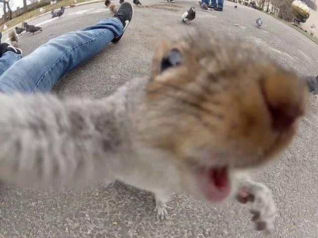 these_funny_animals_1095_640_02