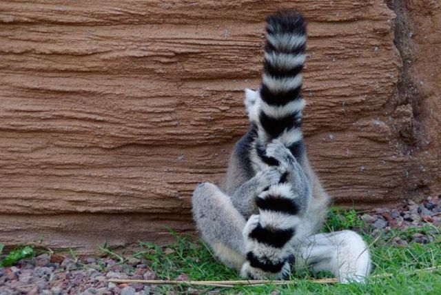 these_funny_animals_1104_640_02