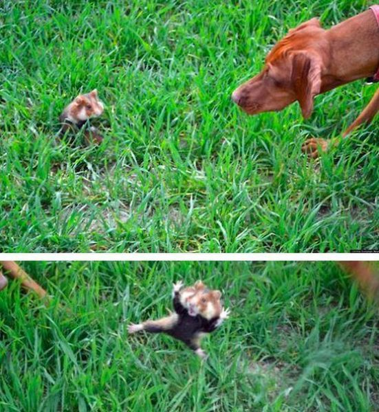 these_funny_animals_1106_640_01