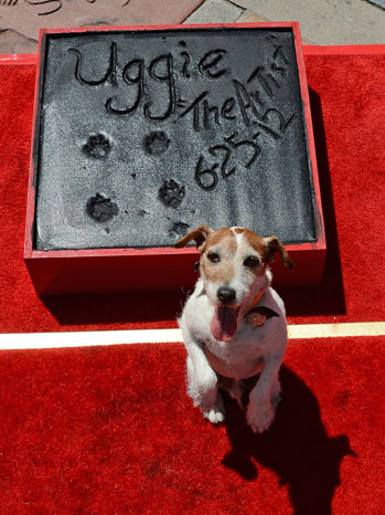Uggie, the dog who starred in the Academ