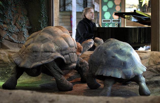 Richard Clayderman a cântat pentru animalele de la zoo Londra