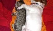Ami si Roxana dorm (2)
