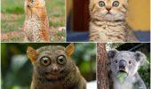Animals-Also-Get-Surprised-001-550x440