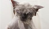Cat bath 5