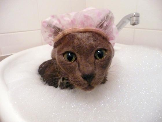 Cat-taking-bath