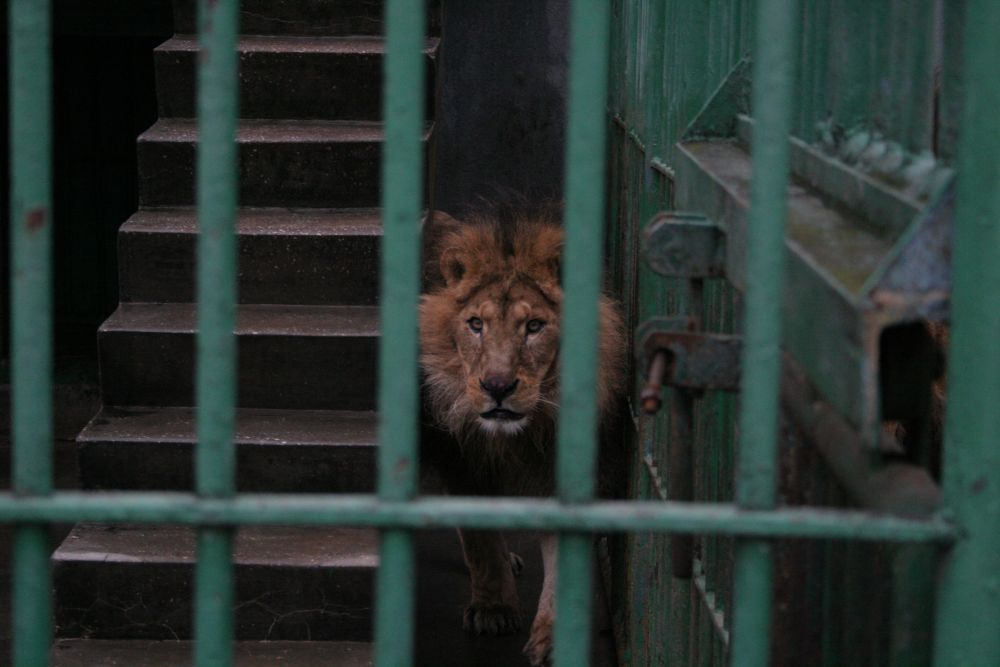 TECUCI LIONS 2009